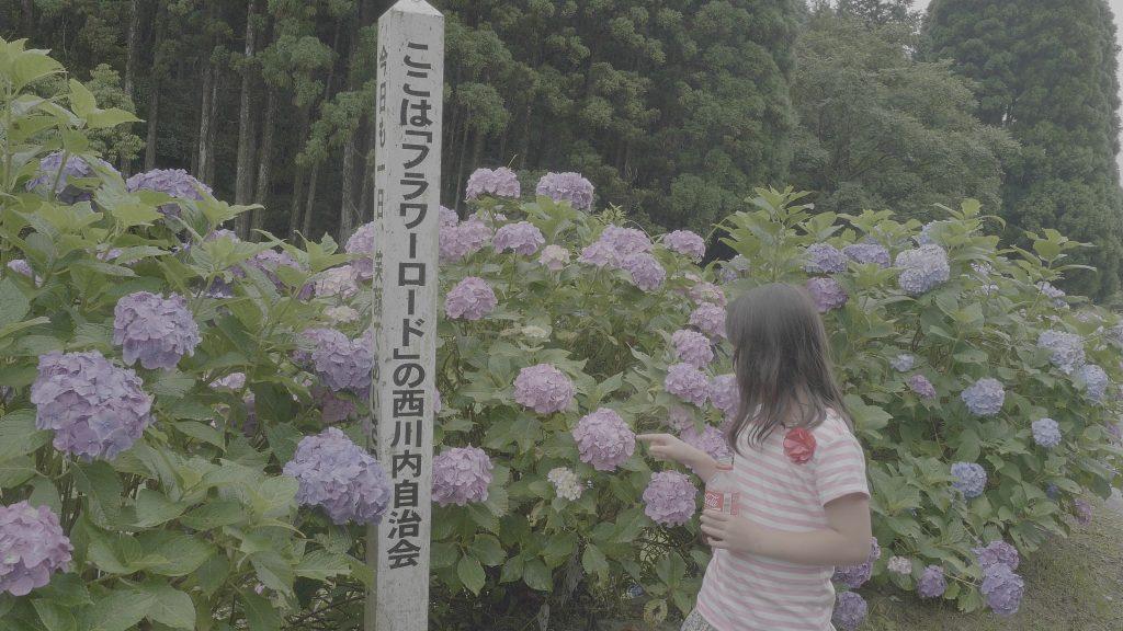 のどかな田園風景が紫陽花をより美しく