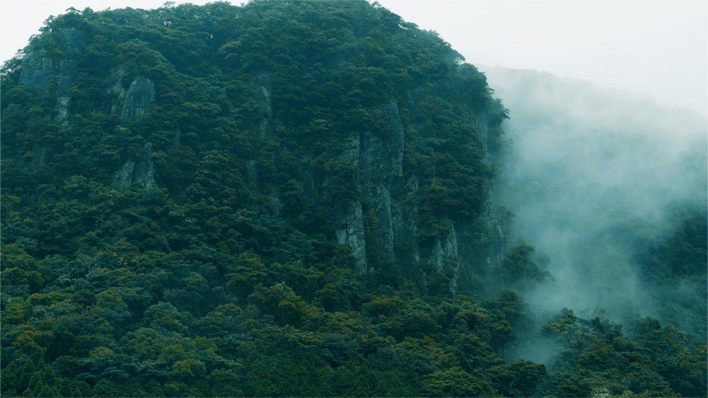 もののけ姫が住んでるような山
